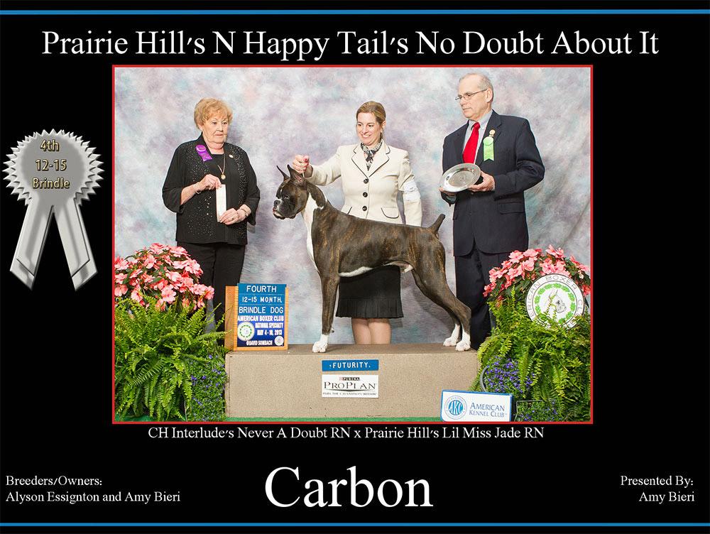 carbon-12-15-brindle-dog-futurity