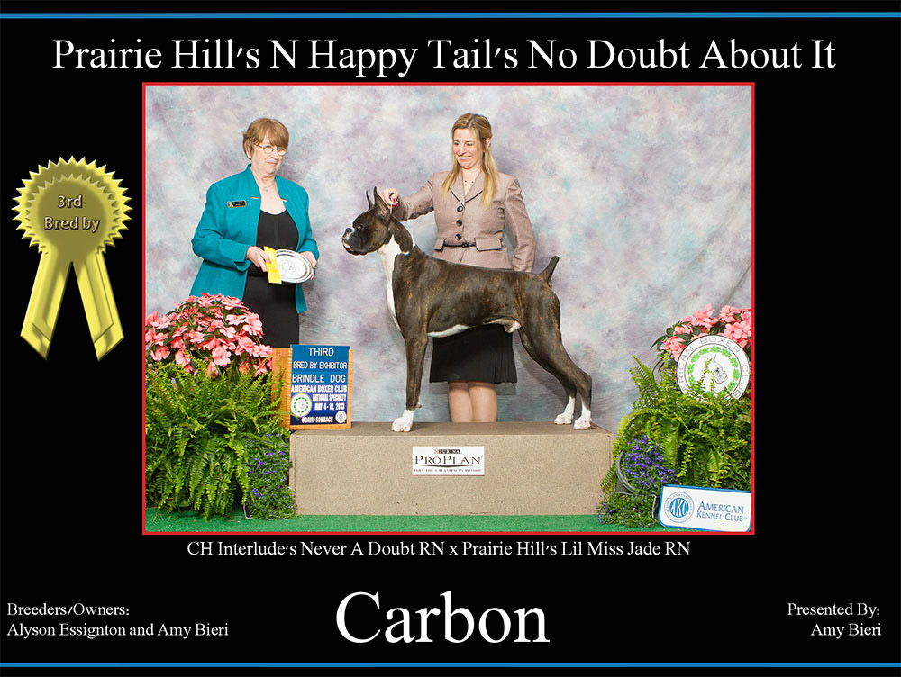 carbon-3rd-bred-by-dog