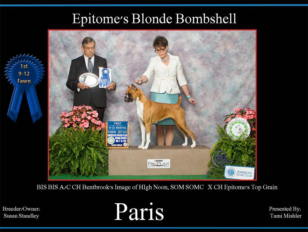 Paris-1st-9-12-fawn-bitch