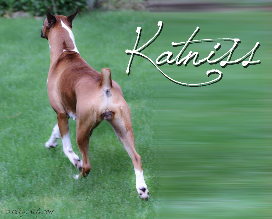 """MBISS GCHS Tenebo's Paint The Town Red """"Katniss"""""""