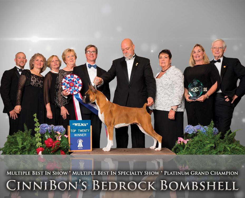 "Feature – MBIS MBISS GCHP CinniBon's Bedrock Bombshell ""Wilma"""