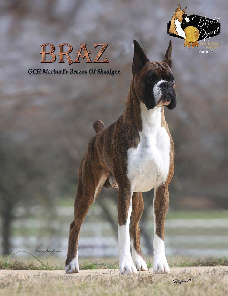 "Feature – GCH Marburl's Brazos of Shadigee ""Braz"""
