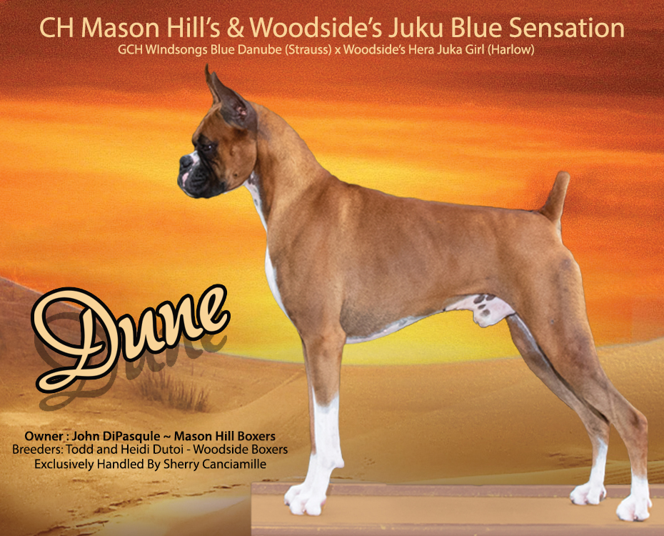 CH Mason Hill's & Woodside's Juku Blue Sensation