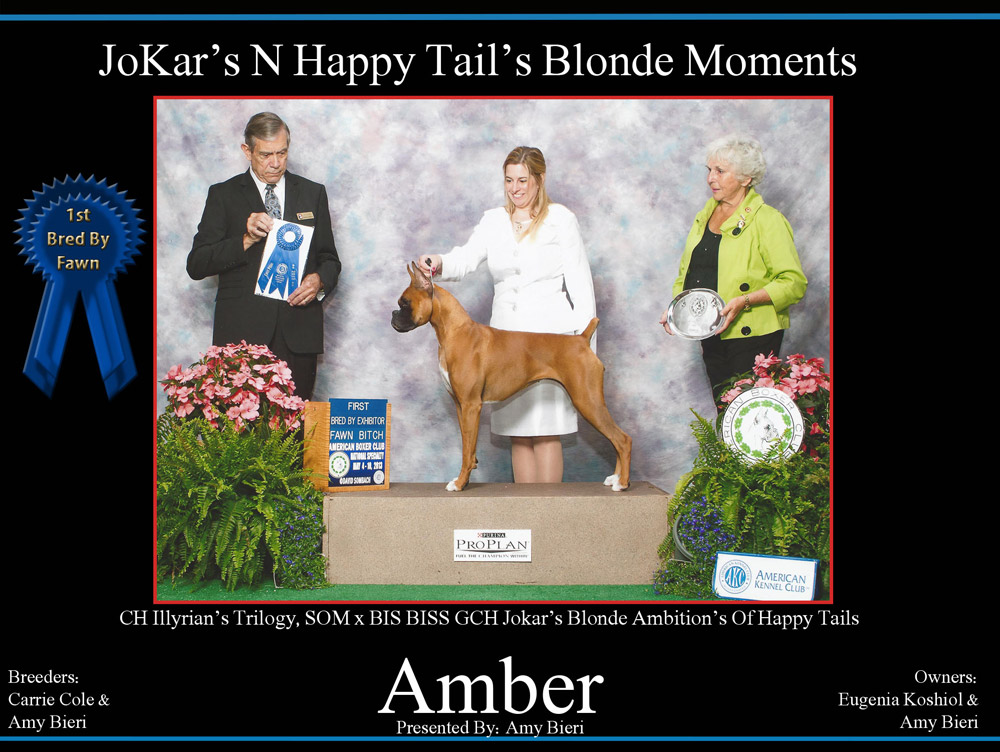 amber--1-bred-by