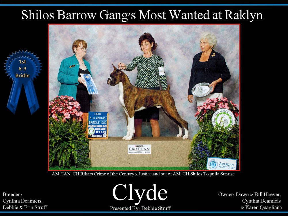 clyde-1st-6-9-brindle-dog